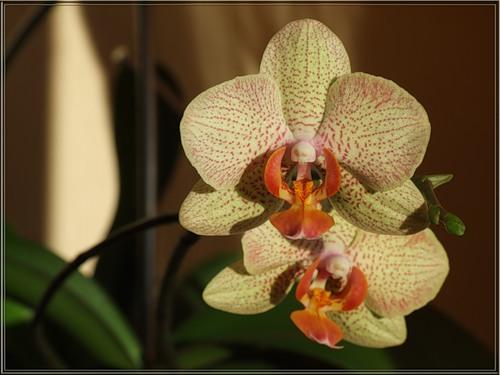 Комнатные цветы полезны для здоровья